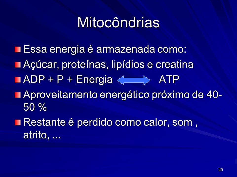 Mitocôndrias Essa energia é armazenada como: