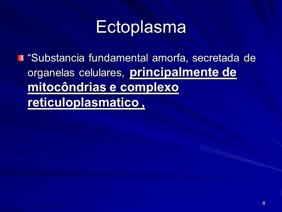 Ectoplasma Substancia fundamental amorfa, secretada de organelas celulares, principalmente de mitocôndrias e complexo reticuloplasmatico ,