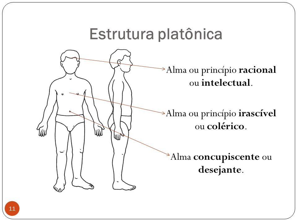 Estrutura platônica Alma ou princípio racional ou intelectual.