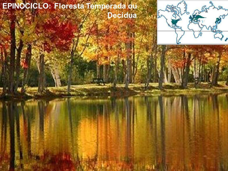 EPINOCICLO: Floresta Temperada ou