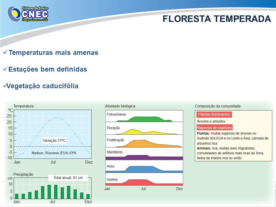 FLORESTA TEMPERADA Temperaturas mais amenas Estações bem definidas