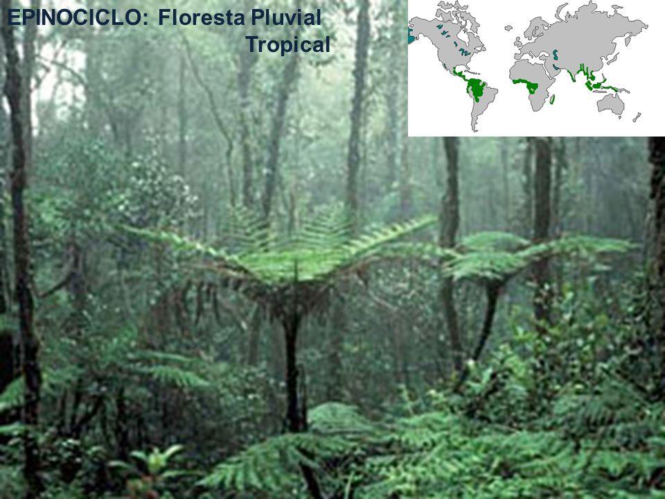 EPINOCICLO: Floresta Pluvial