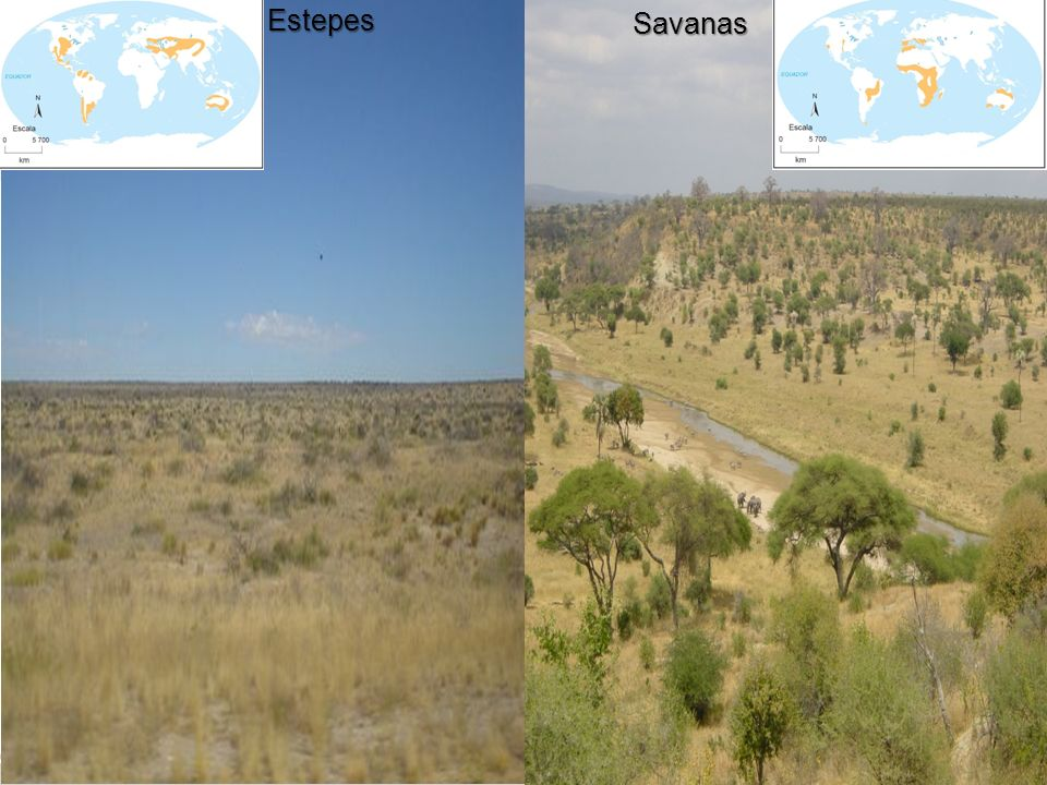 Estepes Savanas