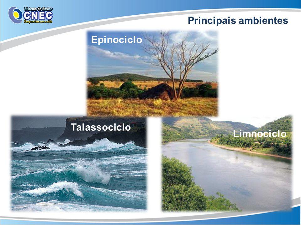 Principais ambientes Epinociclo Talassociclo Limnociclo