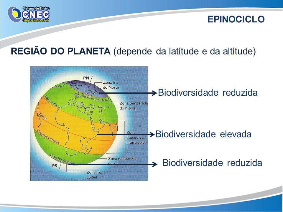 EPINOCICLOREGIÃO DO PLANETA (depende da latitude e da altitude) Biodiversidade reduzida. Biodiversidade elevada.
