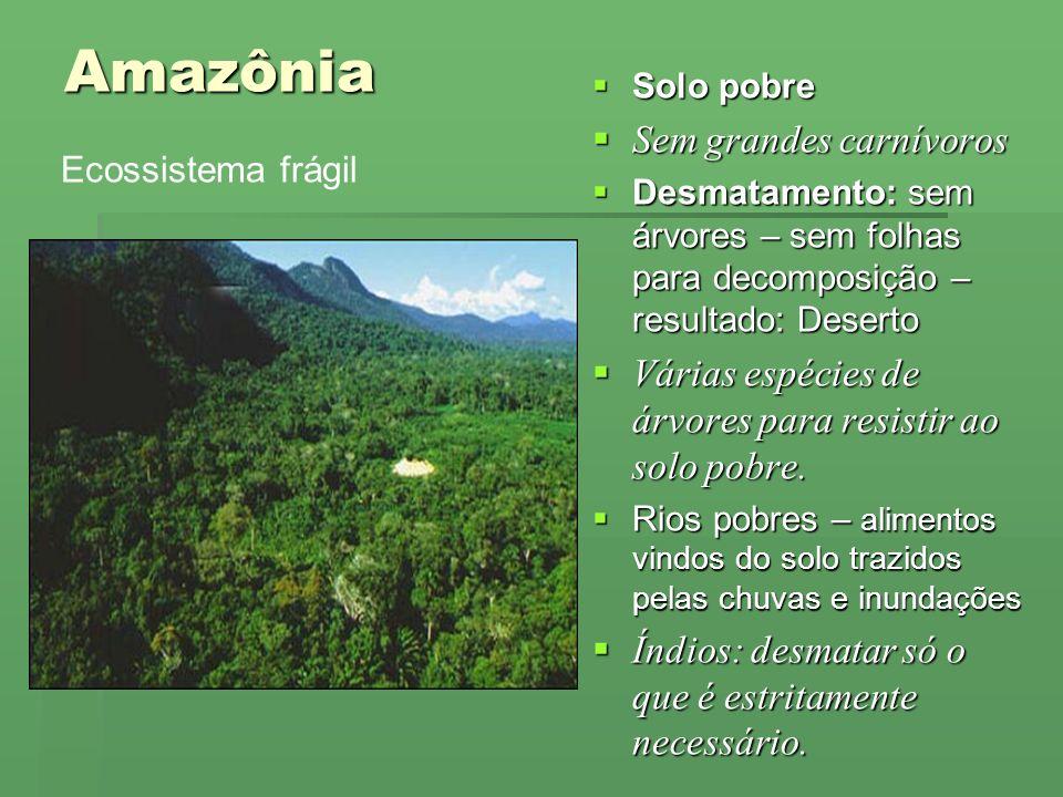 Amazônia Sem grandes carnívoros