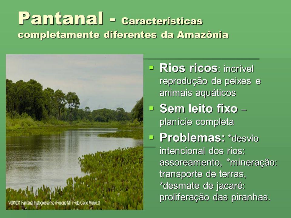 Pantanal - Características completamente diferentes da Amazônia