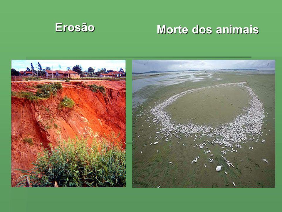Erosão Morte dos animais