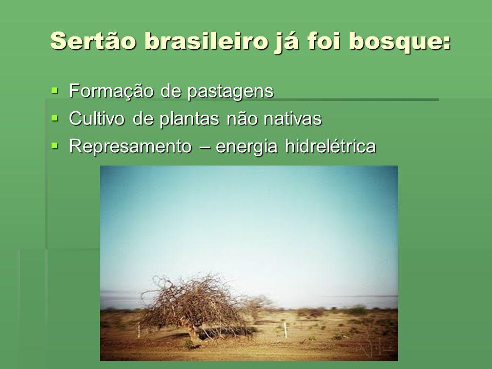 Sertão brasileiro já foi bosque: