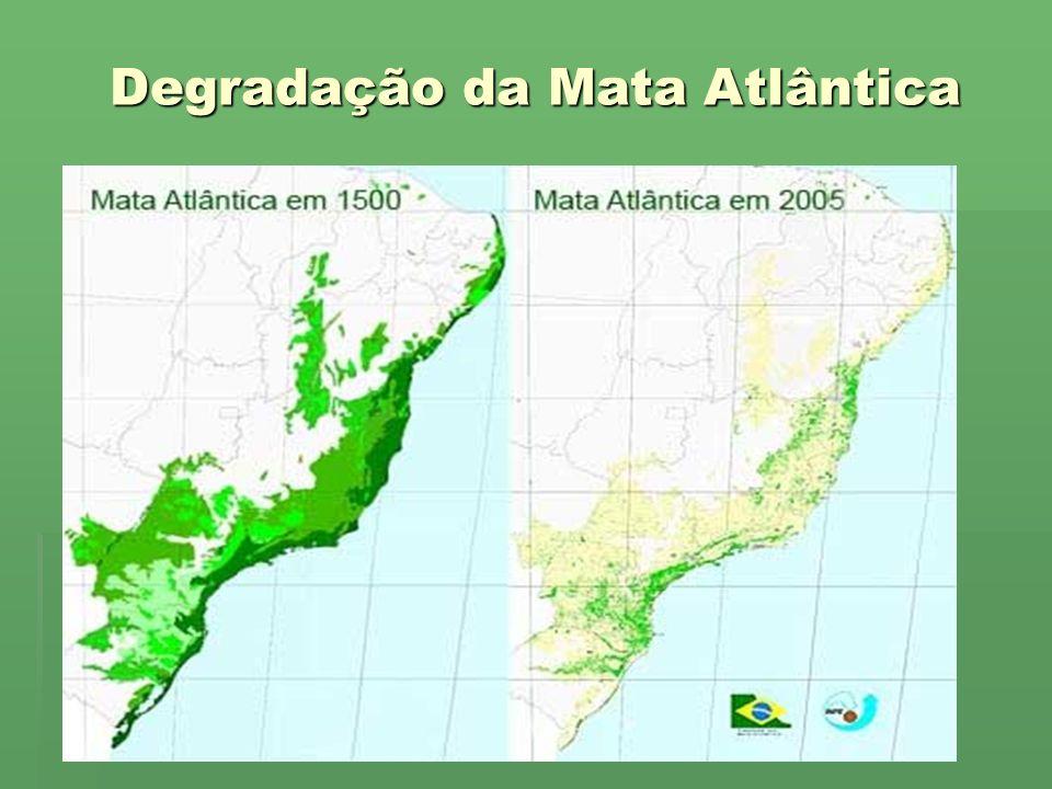 Degradação da Mata Atlântica