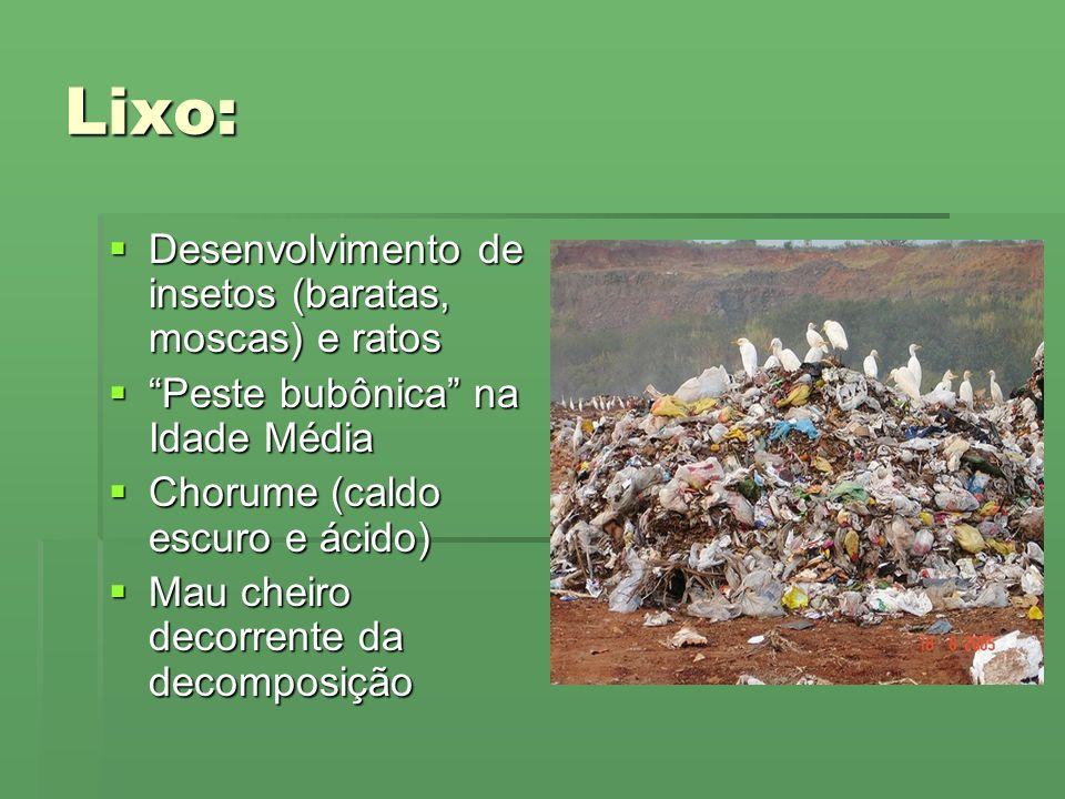 Lixo: Desenvolvimento de insetos (baratas, moscas) e ratos