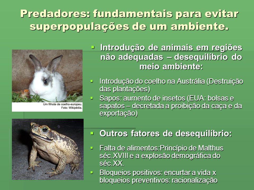 Predadores: fundamentais para evitar superpopulações de um ambiente.