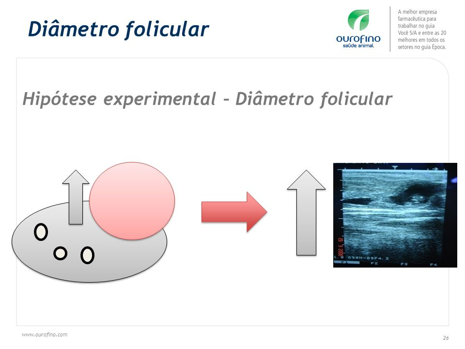 Diâmetro folicular Hipótese experimental – Diâmetro folicular