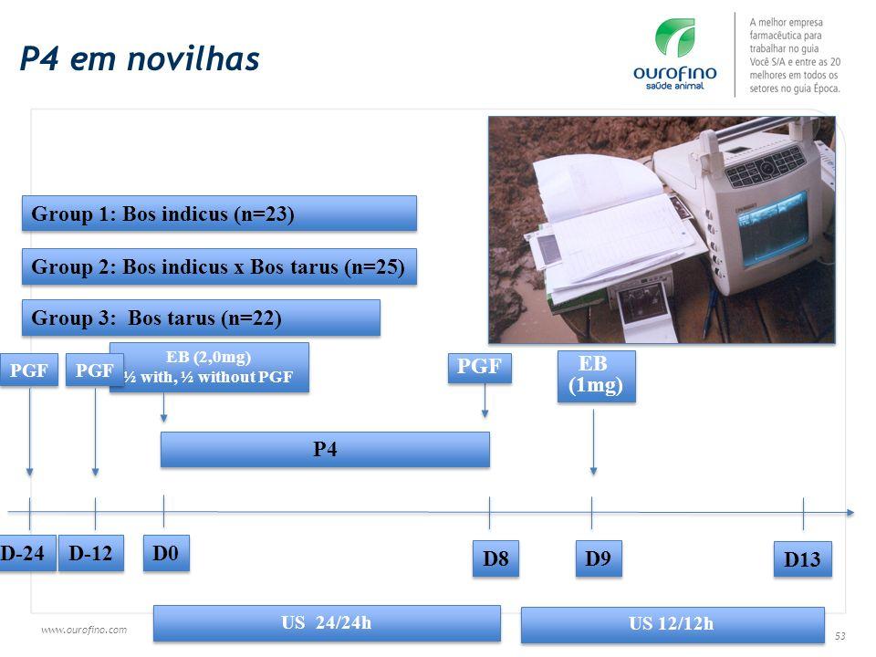 P4 em novilhas Group 1: Bos indicus (n=23)