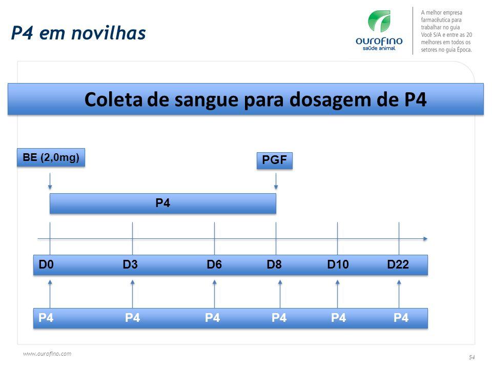 Coleta de sangue para dosagem de P4