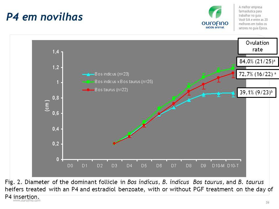 P4 em novilhas Ovulation rate. 84,0% (21/25)a. 72,7% (16/22) a. 39,1% (9/23)b.