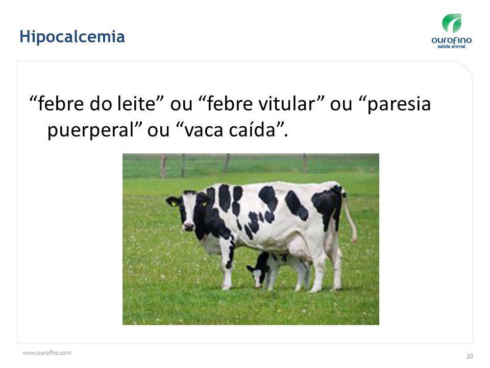 Hipocalcemia febre do leite ou febre vitular ou paresia puerperal ou vaca caída .