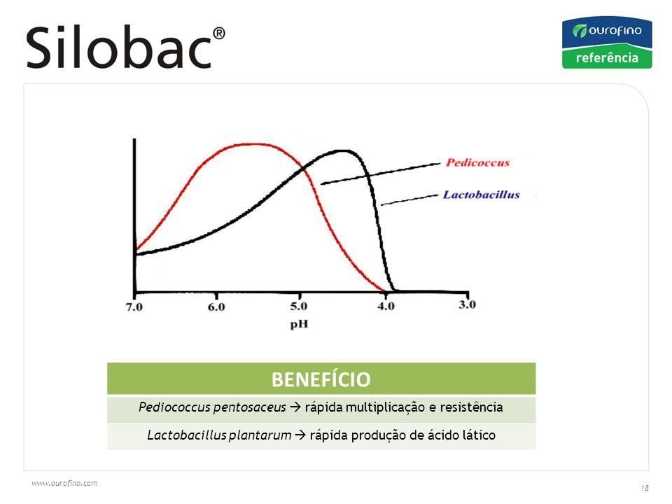 BENEFÍCIO Pediococcus pentosaceus  rápida multiplicação e resistência