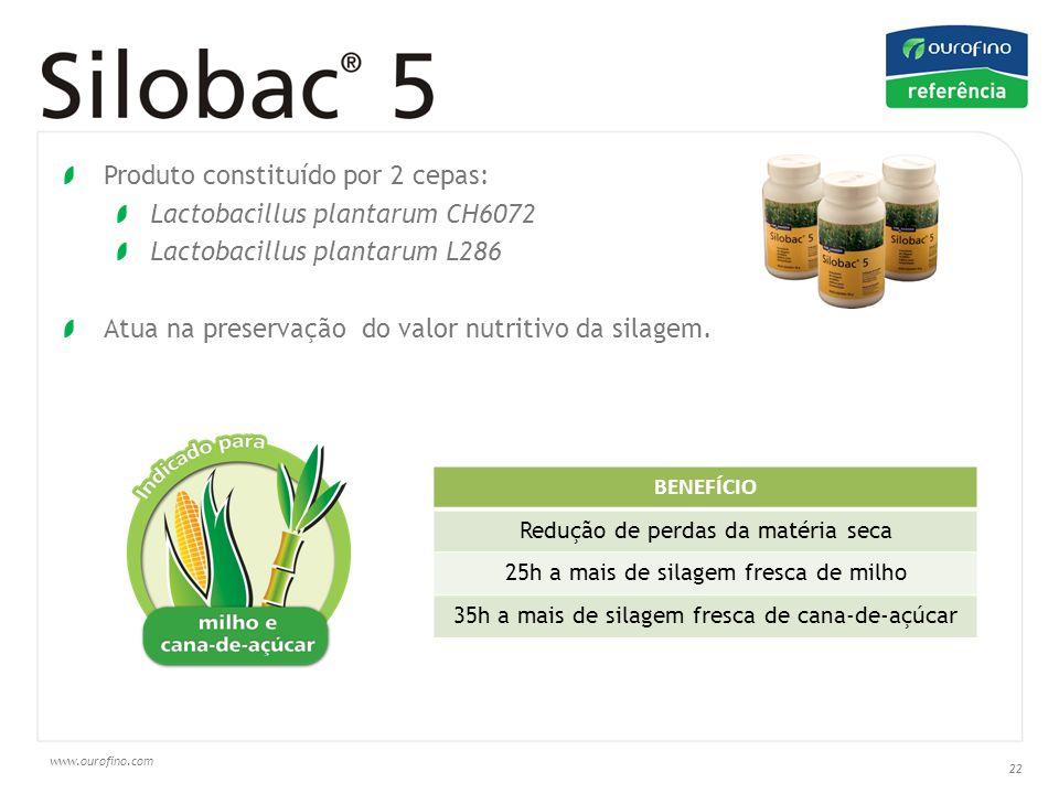 Produto constituído por 2 cepas: Lactobacillus plantarum CH6072