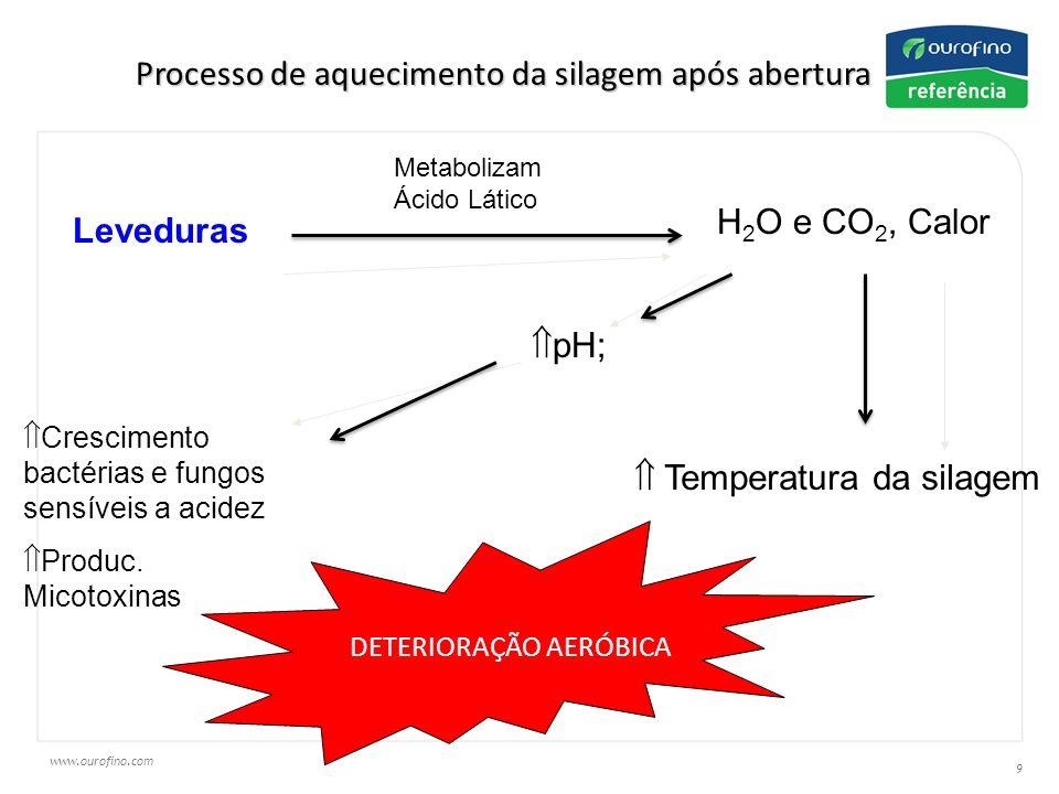 Processo de aquecimento da silagem após abertura