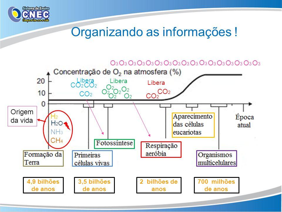 Organizando as informações !
