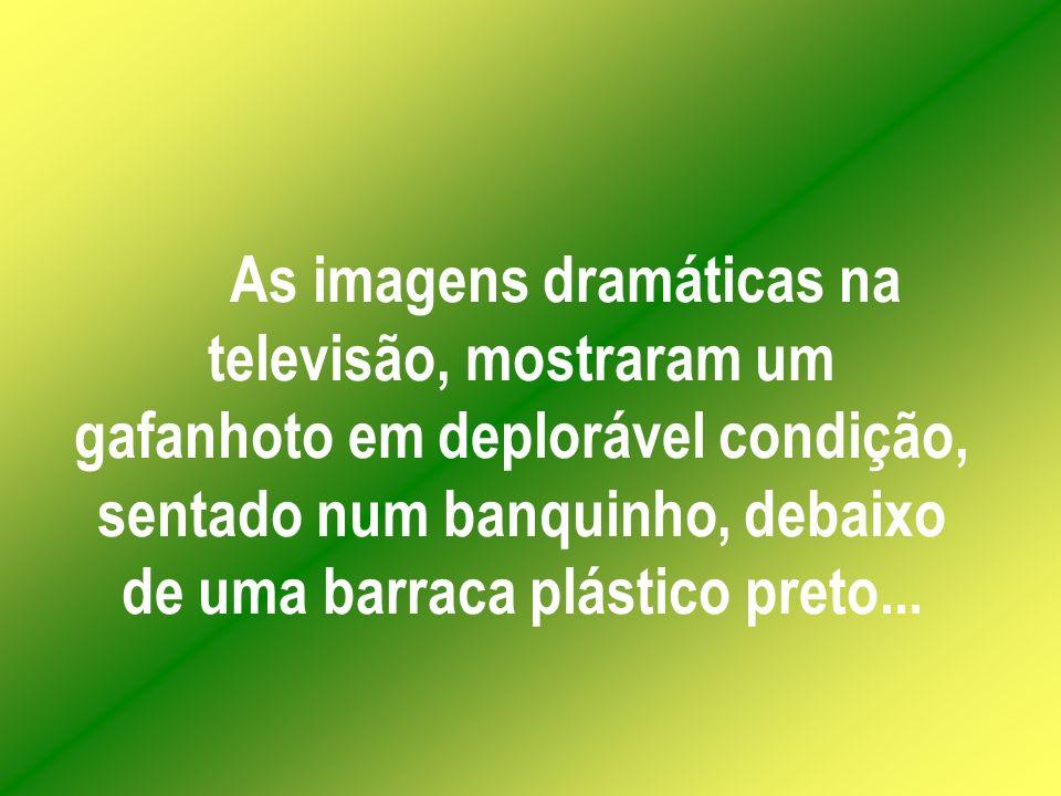 As imagens dramáticas na televisão, mostraram um gafanhoto em deplorável condição, sentado num banquinho, debaixo de uma barraca plástico preto...