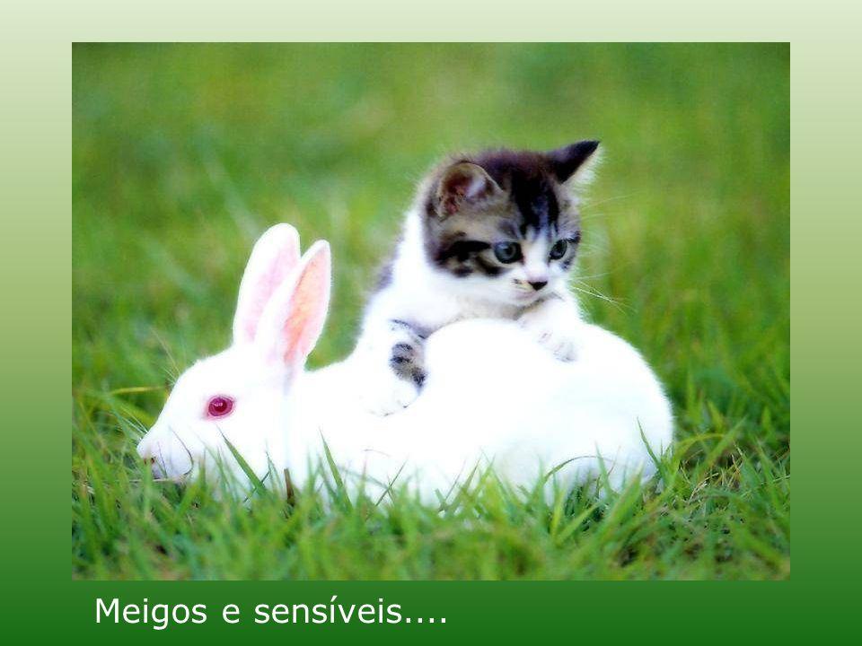 Meigos e sensíveis....