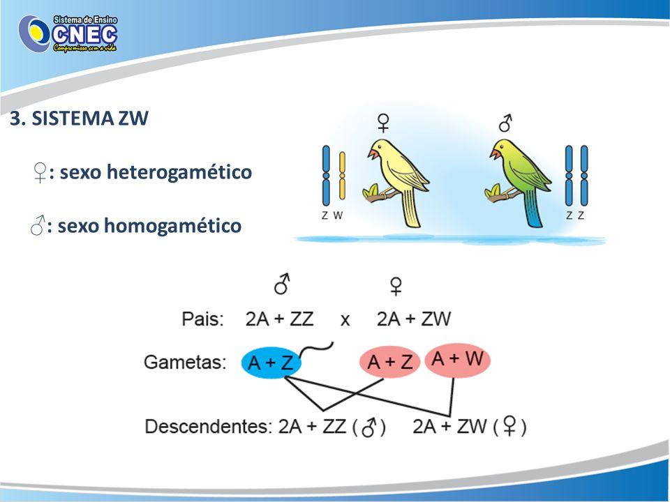 3. SISTEMA ZW ♀: sexo heterogamético ♂: sexo homogamético