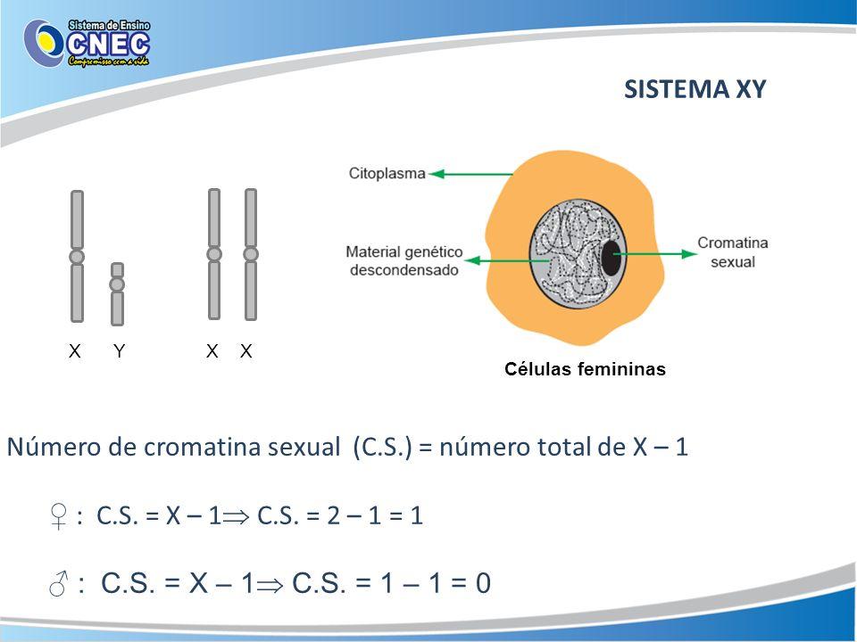 Número de cromatina sexual (C.S.) = número total de X – 1