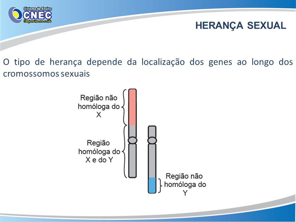 HERANÇA SEXUAL O tipo de herança depende da localização dos genes ao longo dos cromossomos sexuais