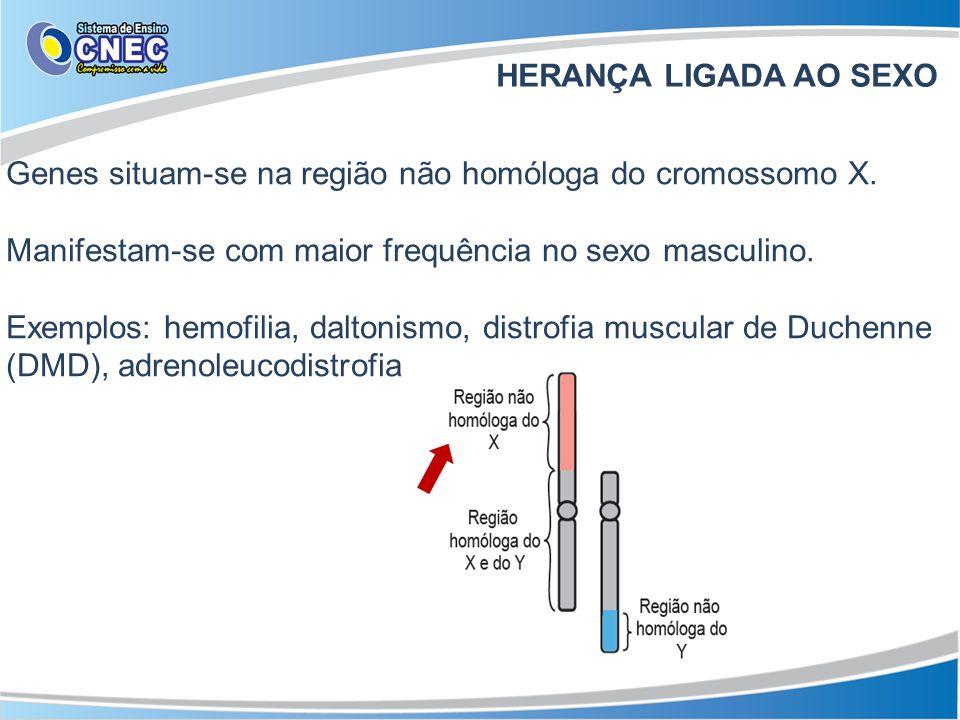 HERANÇA LIGADA AO SEXO Genes situam-se na região não homóloga do cromossomo X. Manifestam-se com maior frequência no sexo masculino.
