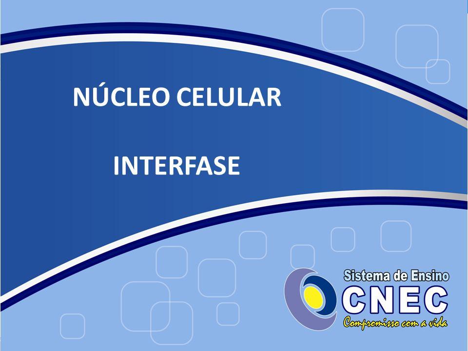 NÚCLEO CELULAR INTERFASE