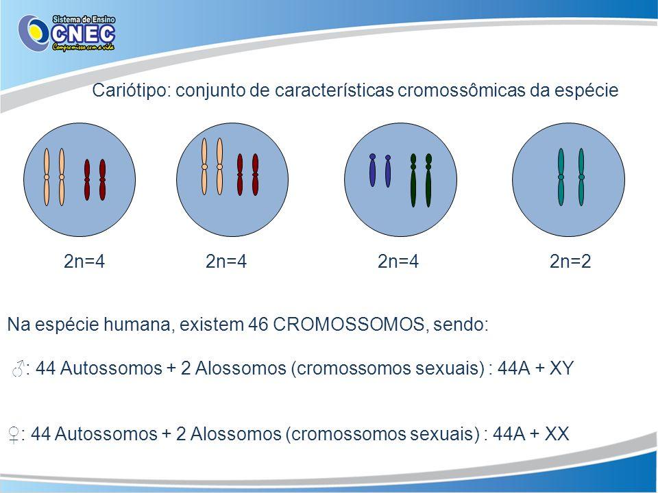 Cariótipo: conjunto de características cromossômicas da espécie
