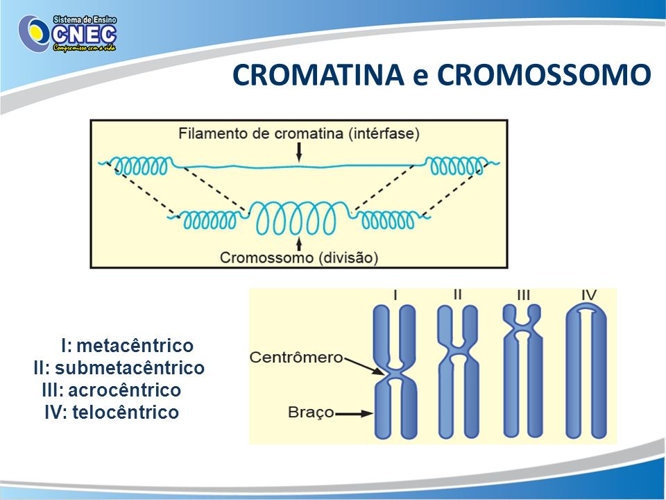 CROMATINA e CROMOSSOMO