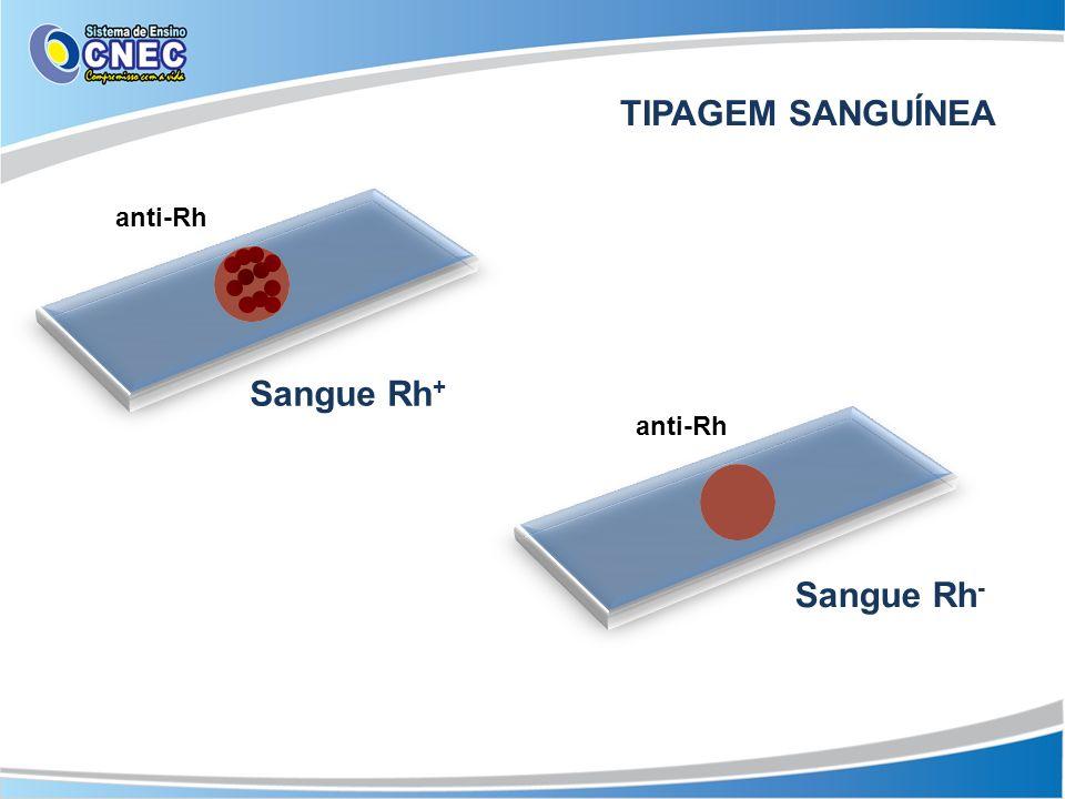 TIPAGEM SANGUÍNEA anti-Rh Sangue Rh+ anti-Rh Sangue Rh-