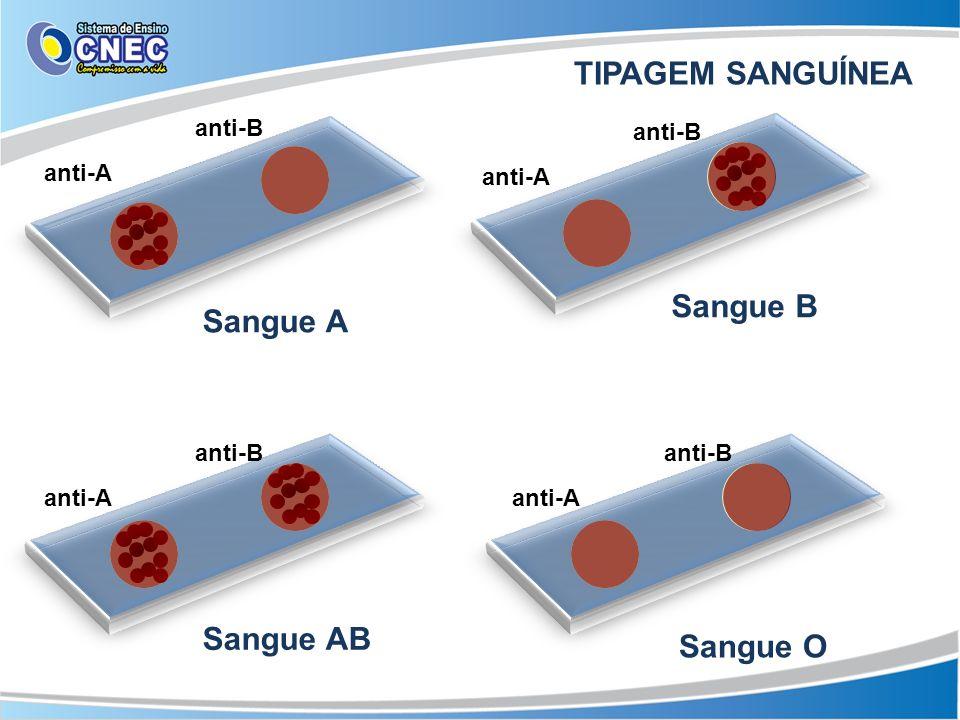 TIPAGEM SANGUÍNEA Sangue B Sangue A Sangue AB Sangue O anti-B anti-B