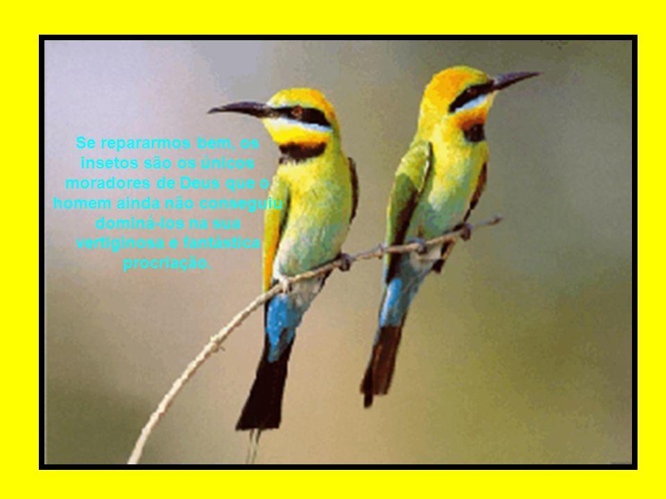 Se repararmos bem, os insetos são os únicos moradores de Deus que o homem ainda não conseguiu dominá-los na sua vertiginosa e fantástica procriação.