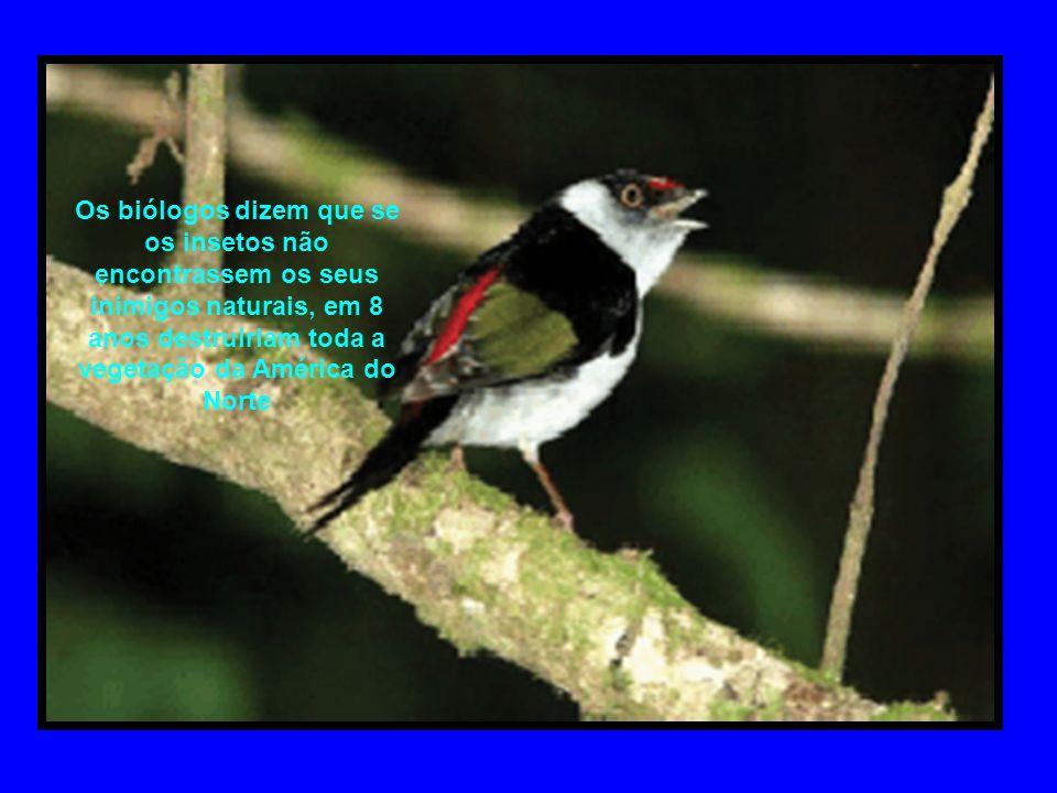 Os biólogos dizem que se os insetos não encontrassem os seus inimigos naturais, em 8 anos destruiriam toda a vegetação da América do Norte