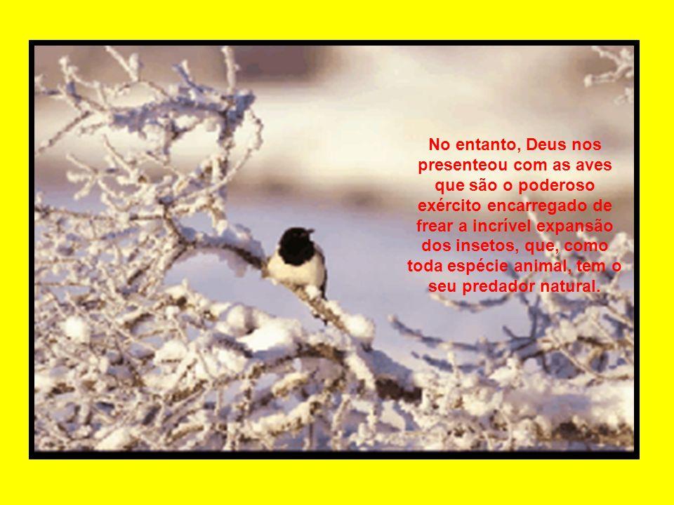 No entanto, Deus nos presenteou com as aves que são o poderoso exército encarregado de frear a incrível expansão dos insetos, que, como toda espécie animal, tem o seu predador natural.
