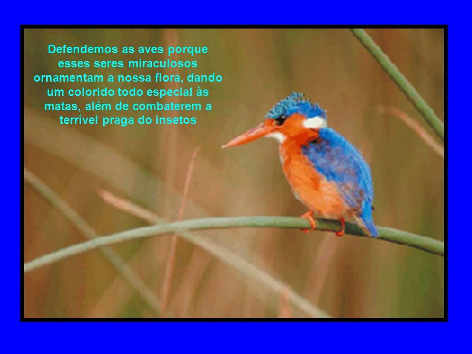 Defendemos as aves porque esses seres miraculosos ornamentam a nossa flora, dando um colorido todo especial às matas, além de combaterem a terrível praga do insetos