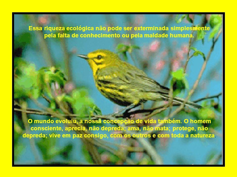 Essa riqueza ecológica não pode ser exterminada simplesmente pela falta de conhecimento ou pela maldade humana.