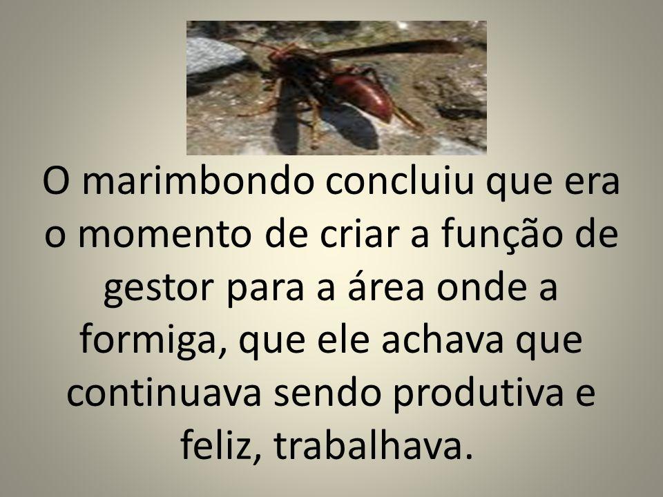 O marimbondo concluiu que era o momento de criar a função de gestor para a área onde a formiga, que ele achava que continuava sendo produtiva e feliz, trabalhava.