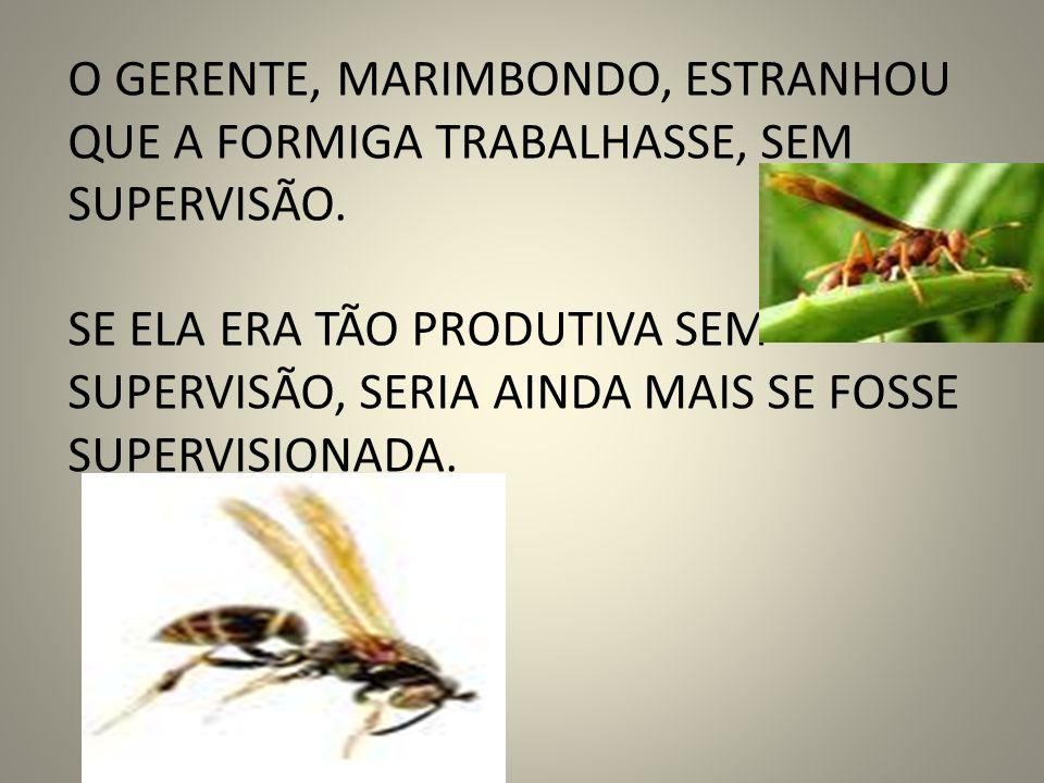 O GERENTE, MARIMBONDO, ESTRANHOU