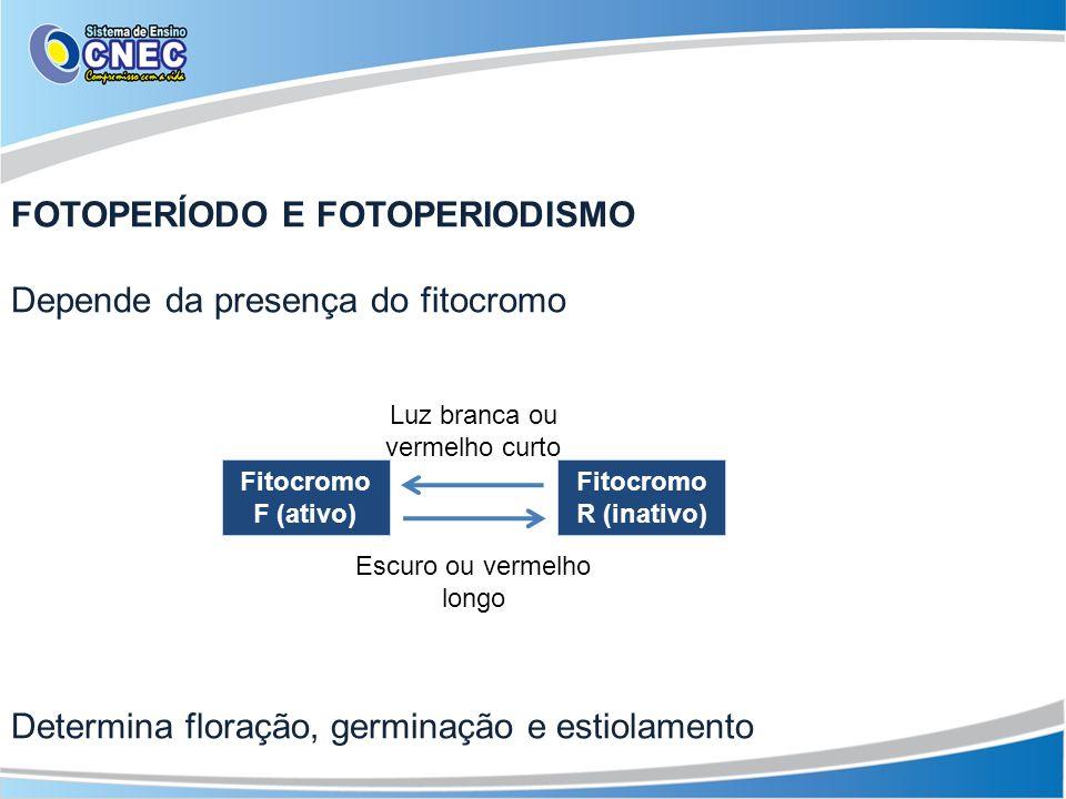 FOTOPERÍODO E FOTOPERIODISMO Depende da presença do fitocromo