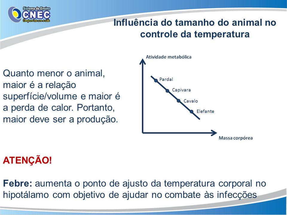 Influência do tamanho do animal no controle da temperatura
