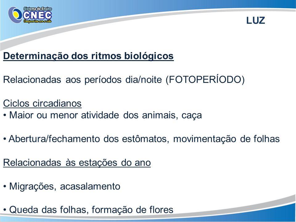LUZ Determinação dos ritmos biológicos. Relacionadas aos períodos dia/noite (FOTOPERÍODO) Ciclos circadianos.