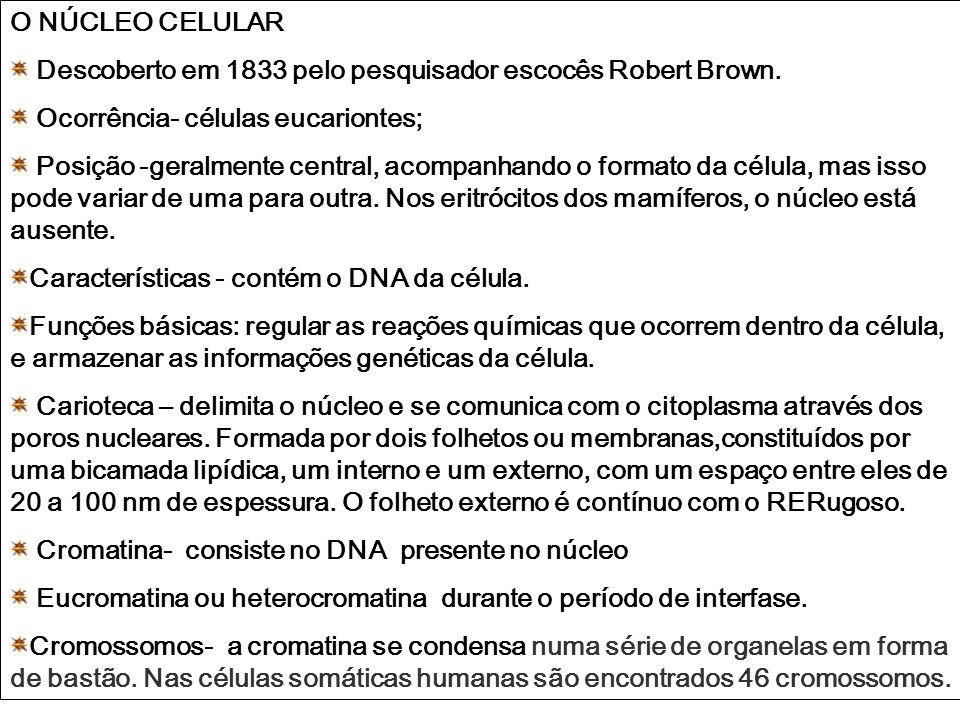 O NÚCLEO CELULAR Descoberto em 1833 pelo pesquisador escocês Robert Brown. Ocorrência- células eucariontes;