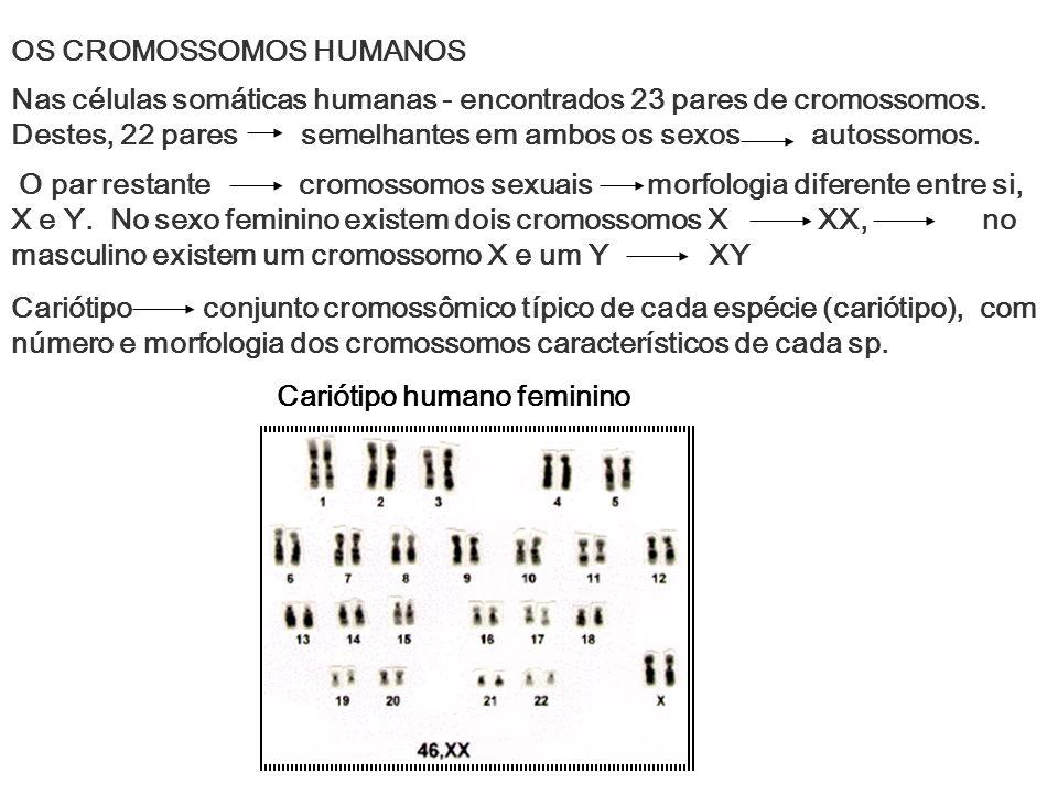 OS CROMOSSOMOS HUMANOS