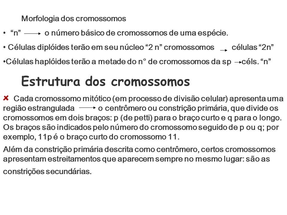 Morfologia dos cromossomos