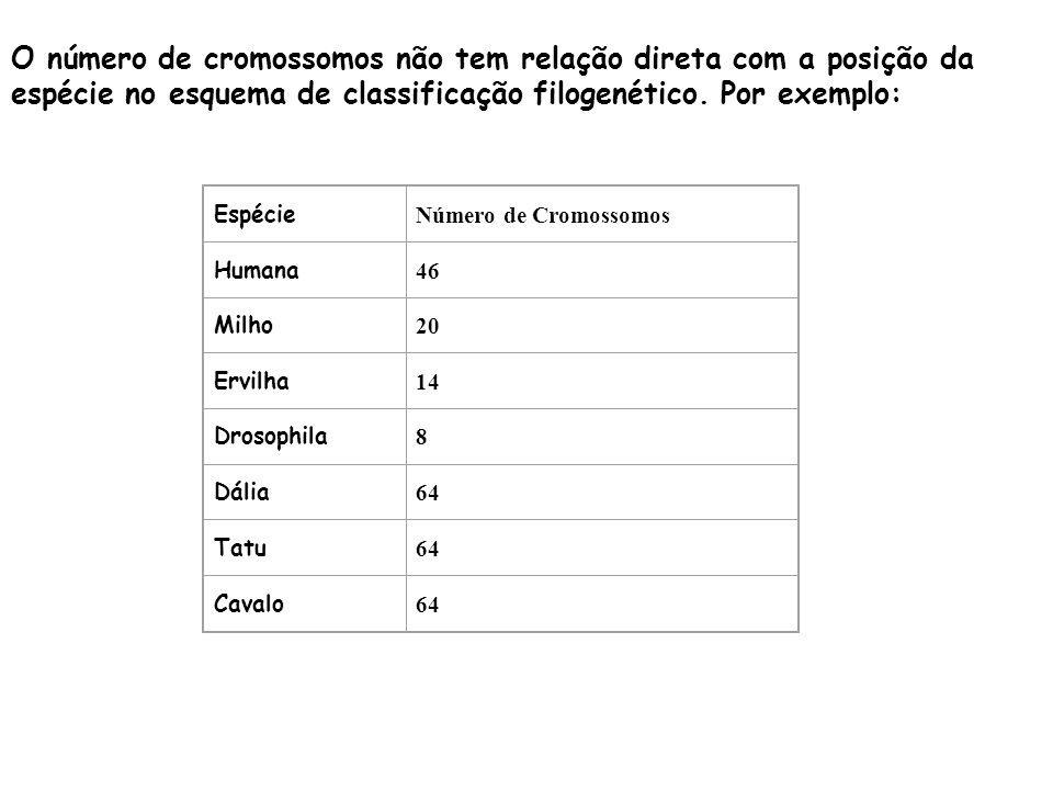O número de cromossomos não tem relação direta com a posição da espécie no esquema de classificação filogenético. Por exemplo: